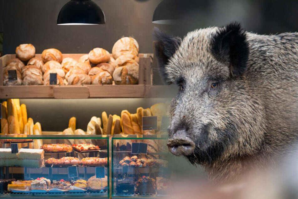 Das Wildschwein hatte zunächst im Verkaufsraum gewütet und war dann in einen angrenzenden Büroraum geflüchtet (Symbolbild).