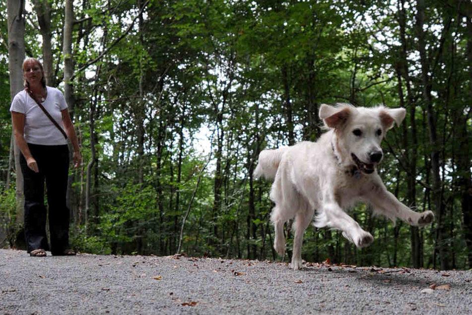 Auch wenn ein Hund ohne Leine läuft, heißt das nicht, dass er machen darf, was er will.