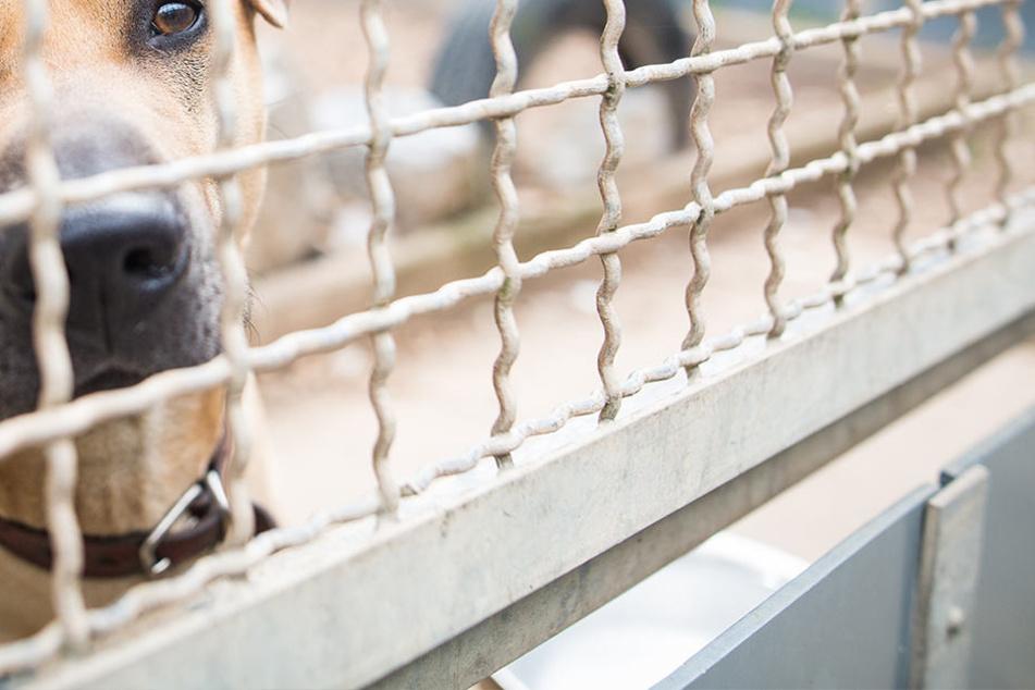"""""""Killer-Hund"""" Chico: Es könnte gut ausgehen für das arme Tier!"""