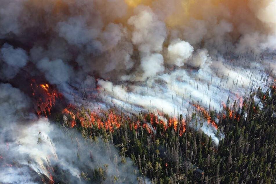 Gewaltige Flammen verschlucken die Wälder im Osten Russlands.