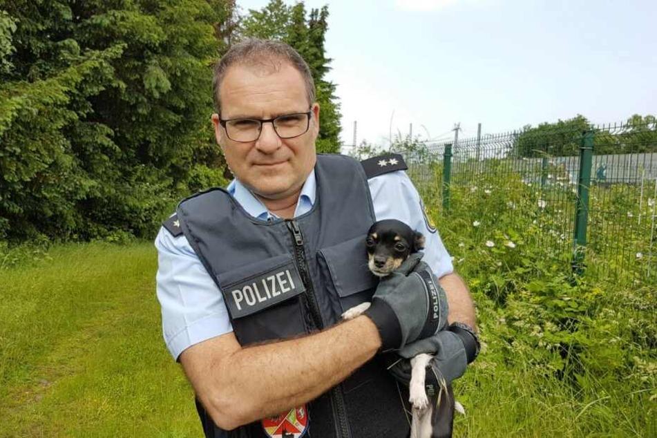 Köln: Kleiner Hund in Gefahr: Polizei eilt zur Rettung