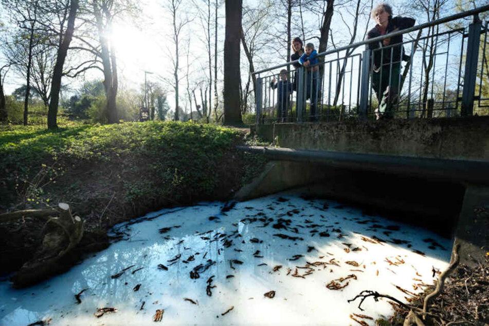 So weiß erstrahlte das Wasser rund um die SchücoArena.