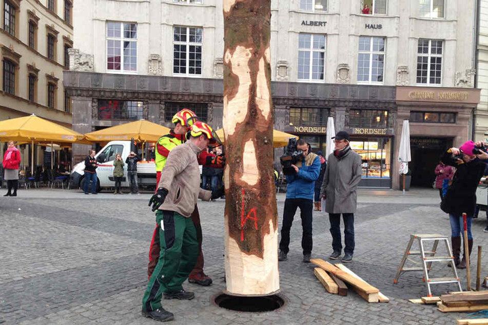 Gut 3 Meter des Stammes werden in dem Loch auf dem Marktplatz versenkt.