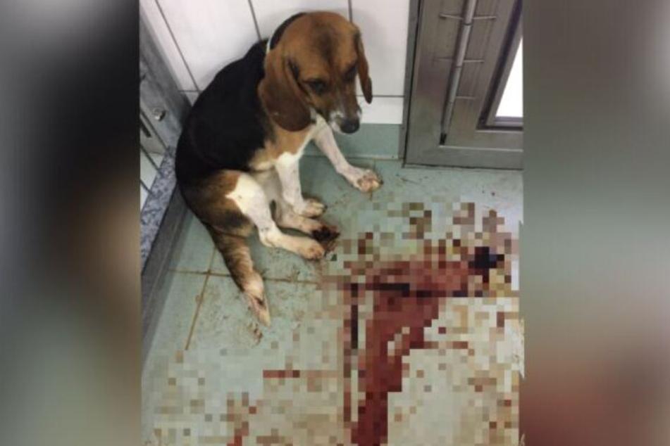 Ein Hund kauert in seinem blutverschmierten Zwinger im LPT.