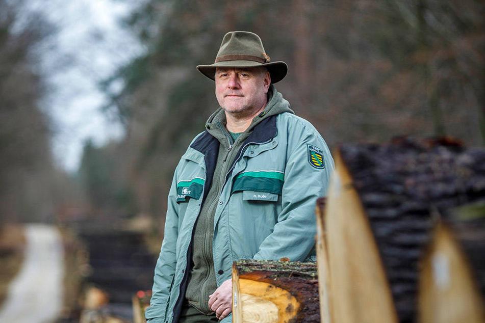 Gibt Hunderte Baumstämme an den Meistbietenden ab: Revierförster Rüdiger Rolle