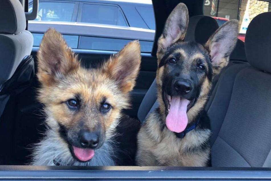 Ranger mit seiner Schwester - beide sind im gleichen Alter.