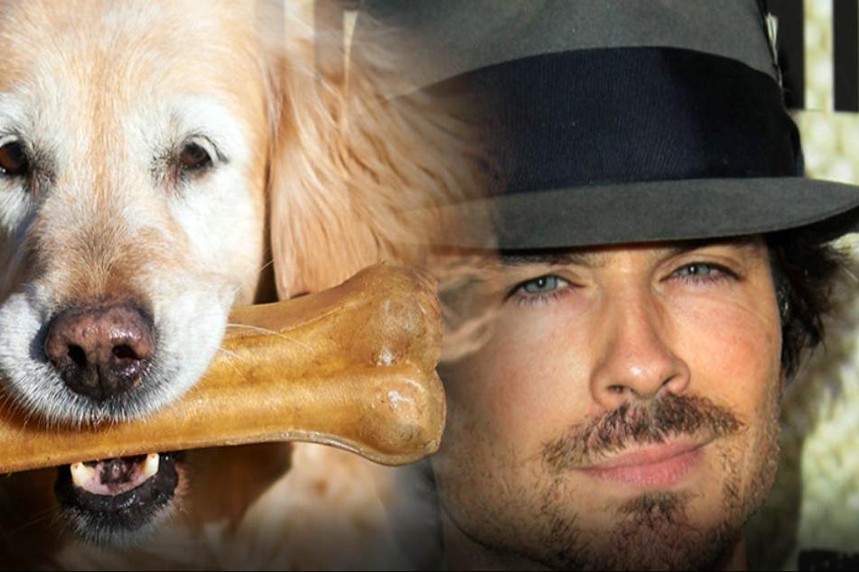 Hunde machen sexy... Ian Somerhalder liebt Hunde.