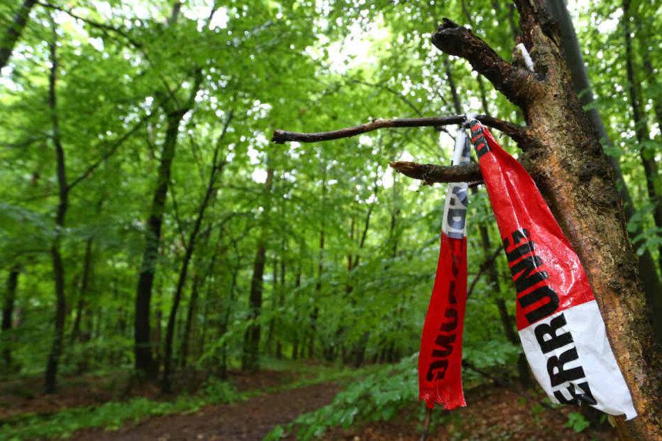 Reste von Absperrbändern der Polizei hängen in einem Waldstück. (Symbolbild)