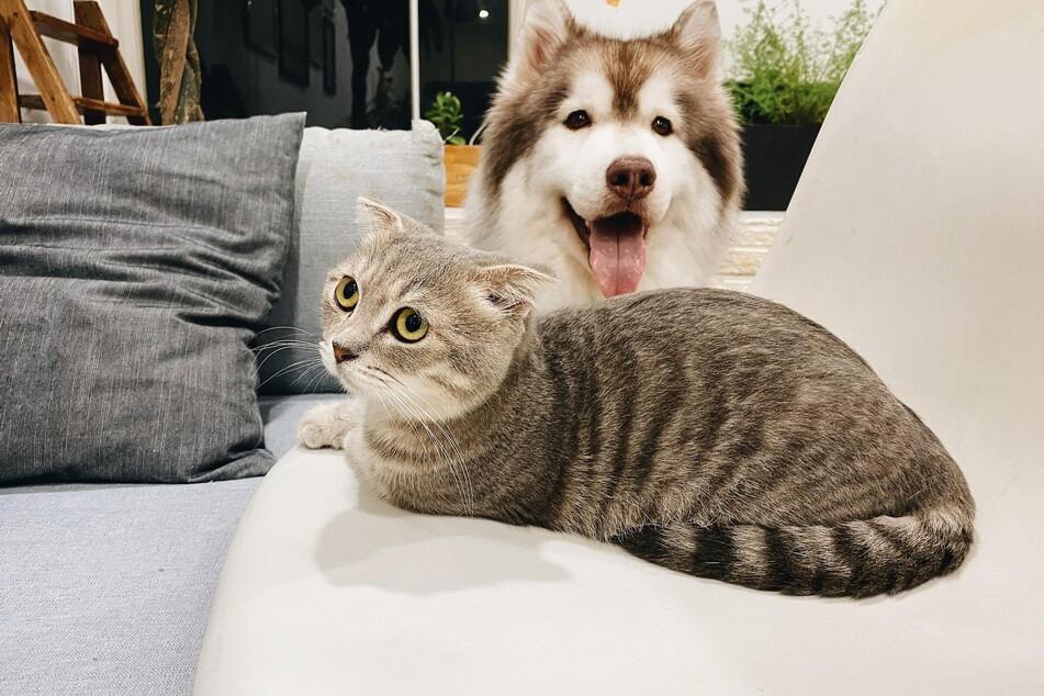 Neue Mitbewohner, ein Umzug, eine renovierte Wohnung oder verstorbene Artgenossen: Stress durch Veränderungen kann bei Katzen zu aggressivem Verhalten führen.