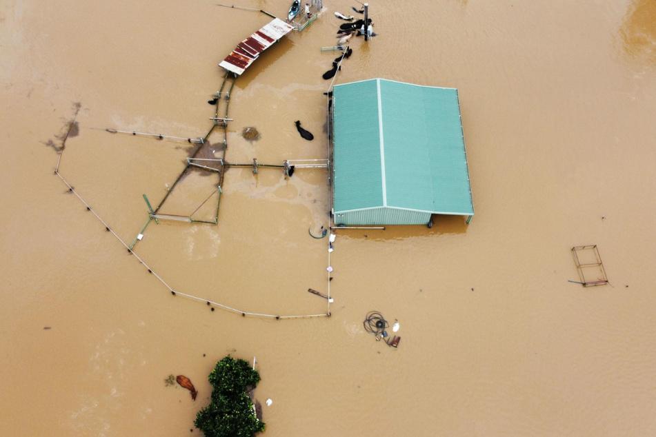 Blick auf eine überschwemmte Farm, von der nur noch Umrisse und im Wasser stehende Tiere erkennbar sind.