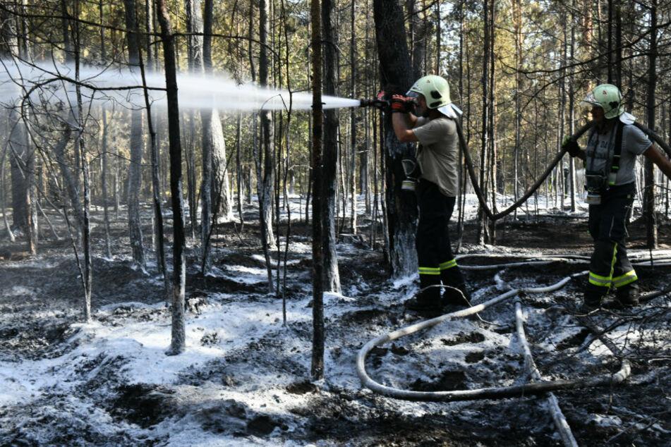 Wegen Trockenheit: Waldbrandgefahr erreicht in Brandenburg höchste Stufe