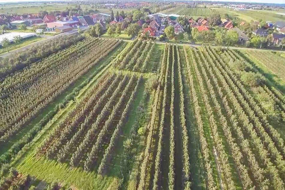 Das Alte Land ist durch Obstanbau geprägt.