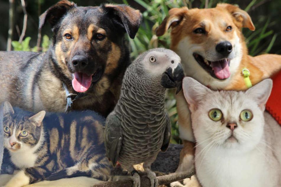 5 besondere Tiere: Was diese Hunde und Katzen erlebt haben, geht ans Herz