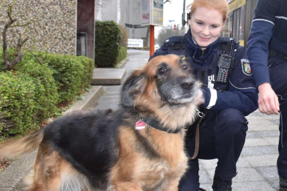 Hund steigt in einen Bus, dann muss die Polizei anrücken