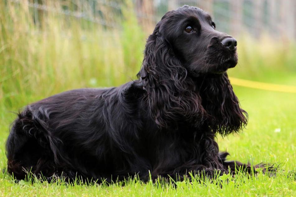 Hund halluziniert und kollabiert beim Spaziergang: Frau warnt andere Besitzer