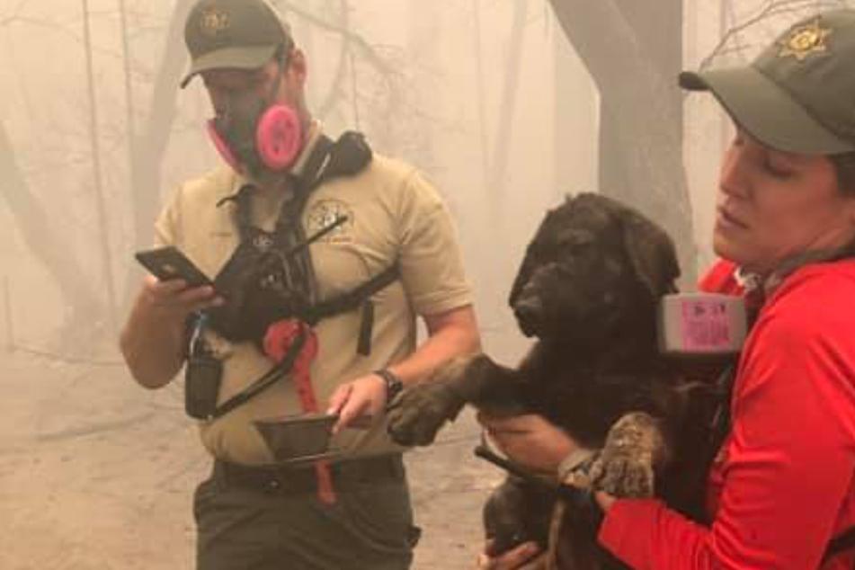 Retter entdecken in komplett abgebranntem Haus eine tierische Überraschung