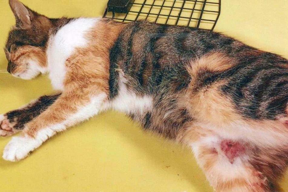 Die Katze hatte schwere Verletzungen, überlebte nur mit großen Glück.