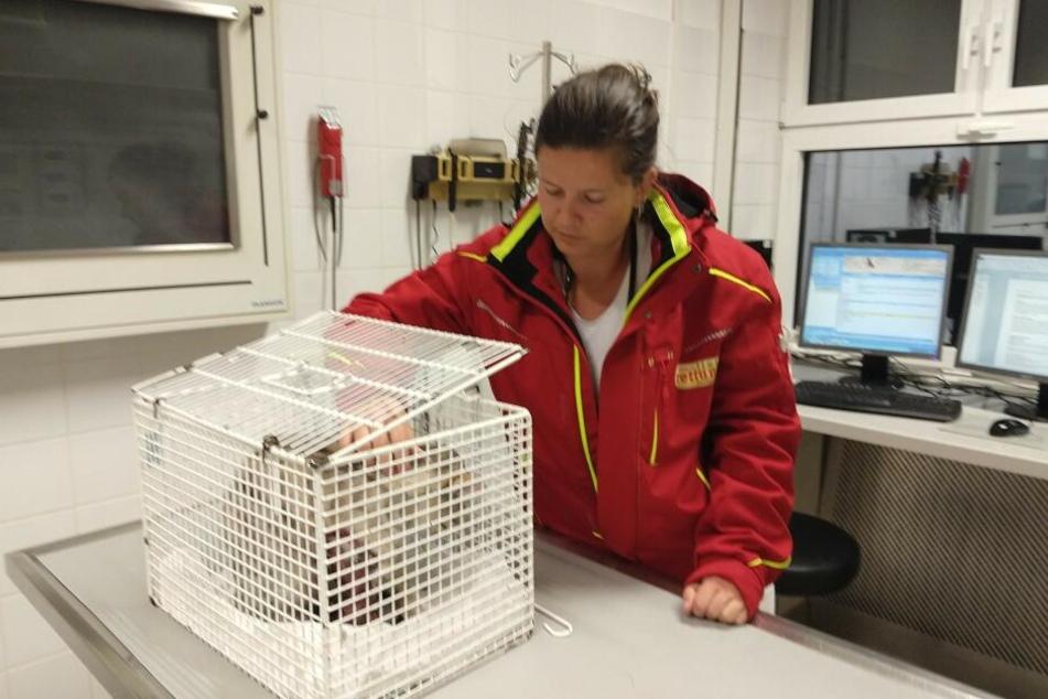 Der verletzte Kater wurde von den Ärzten der Tierrettung München behandelt.