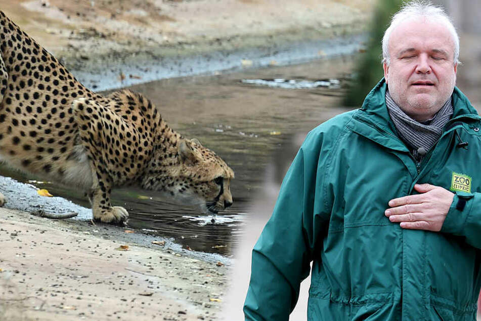 """Junhold will """"die Liebe der Besucher für Tiere und den Erhalt der Natur wecken"""" - dafür gab's am Freitag den sächsischen Tierschutzpreis."""