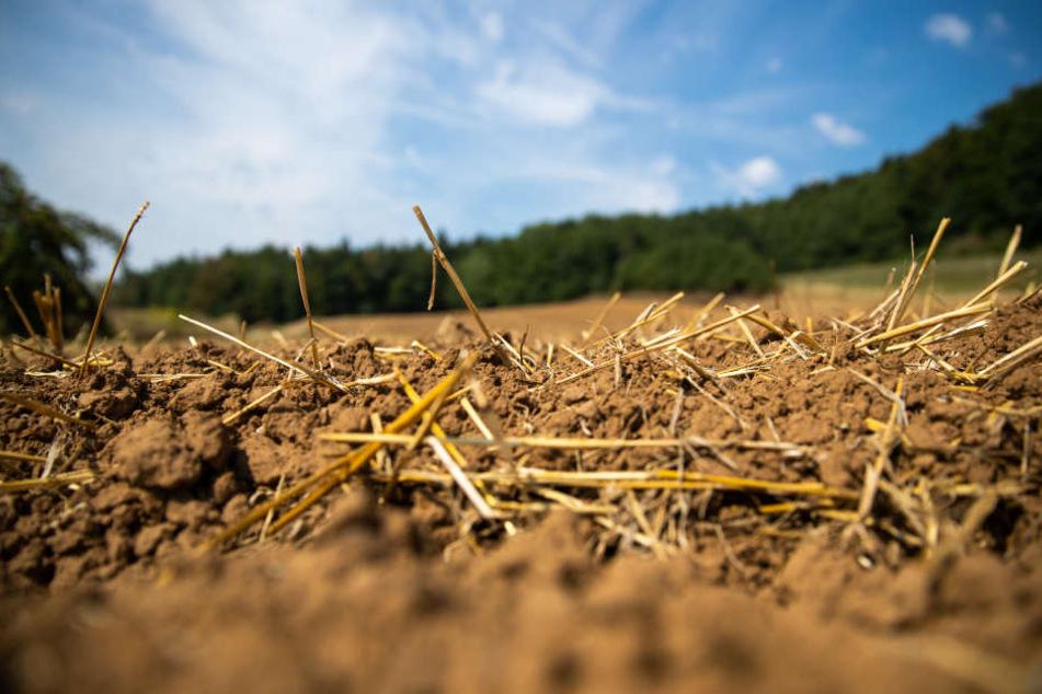 Im Sommer hatte die extreme Dürre vielen Bauern zu schaffen gemacht.