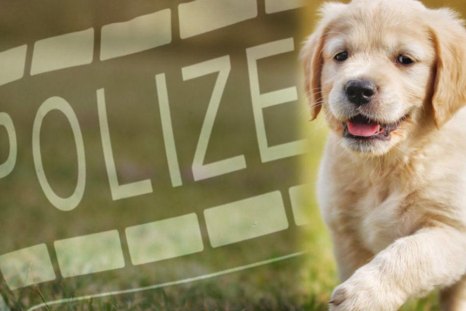 Eine Hundehasser hat eine Frau aufgrund ihres Welpen attackiert (Symbolbild)