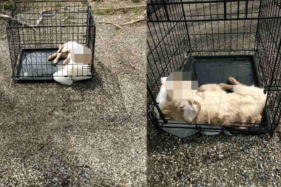 Traurige Bilder: Welpe liegt tot in Käfig, der in Fluss geworfen wurde