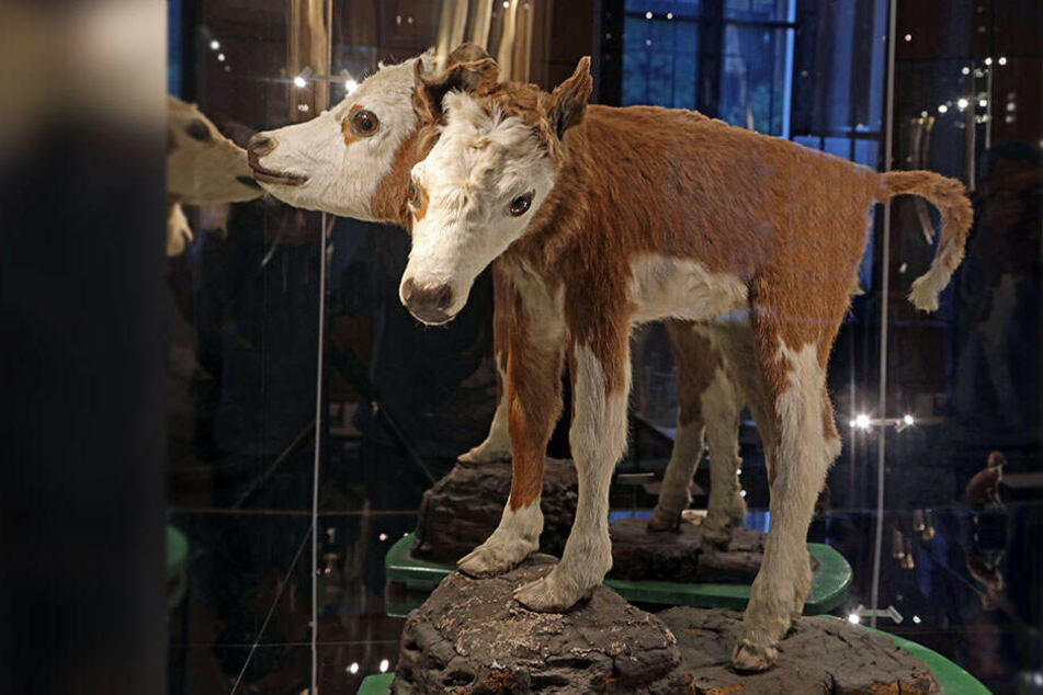 Sächsischer Museumspreis 2019 geht nach Waldenburg