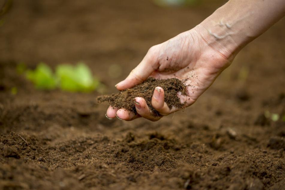 Die Bewohner hatten den Schädel im eigenen Garten gefunden. (Symbolbild)