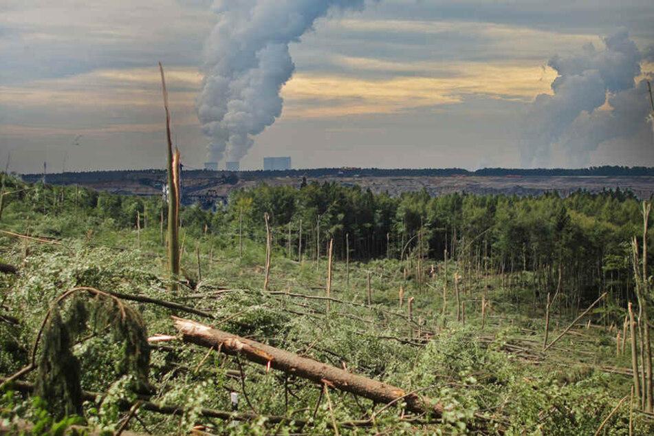Erhöhter CO2-Ausstoß beschleunigt den Klimawandel und damit steigen die Stressfaktoren für Wälder. (Bildmontage)