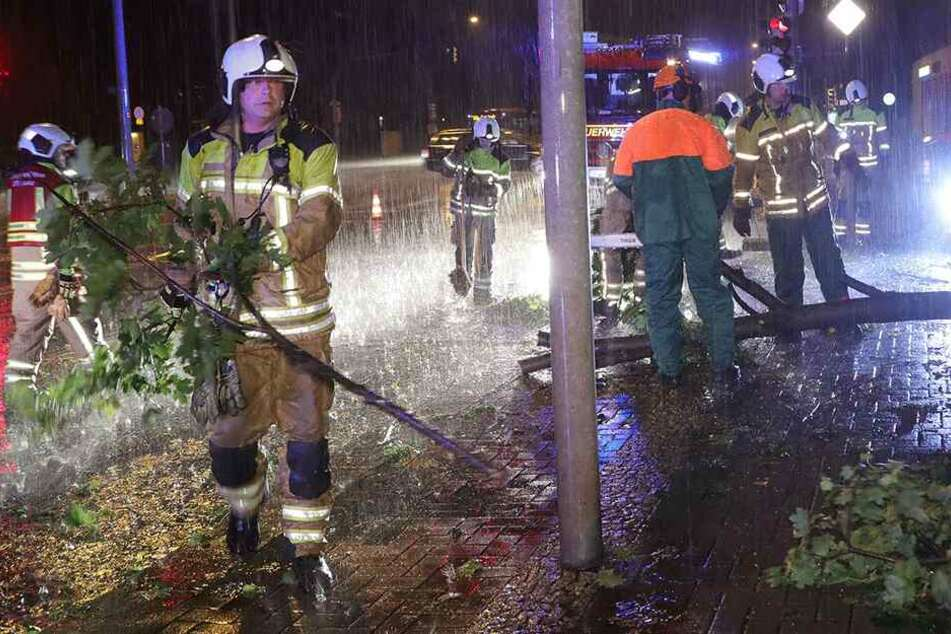 Auch an der Nossener Brücke/Ecke Chemnitzer Straße musste ein umgestürzter Baum beseitigt werden.