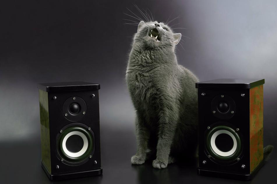 Kaum zu glauben: Diese kleine Katze hatte es ganz allein geschafft, die Stereoanlage einzuschalten und auf volle Lautstärke zu drehen (Symbolbild).