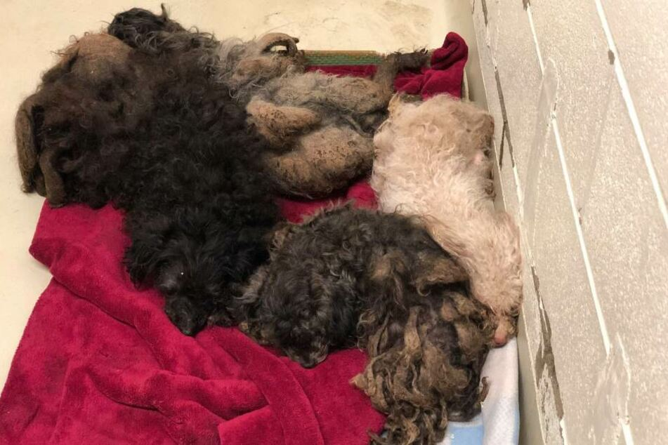 Das ist nur ein Teil der 111 gefundenen Hunde. Die fünf Vierbeiner warten nun auf Hilfe.