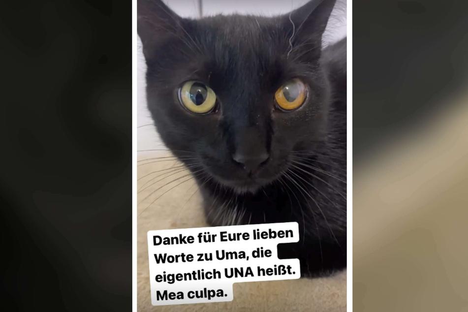 """Katze """"Una"""" wurde kurz nach ihrer Adoption """"reklamiert"""" und sucht nun erneut ein neues Zuhause."""