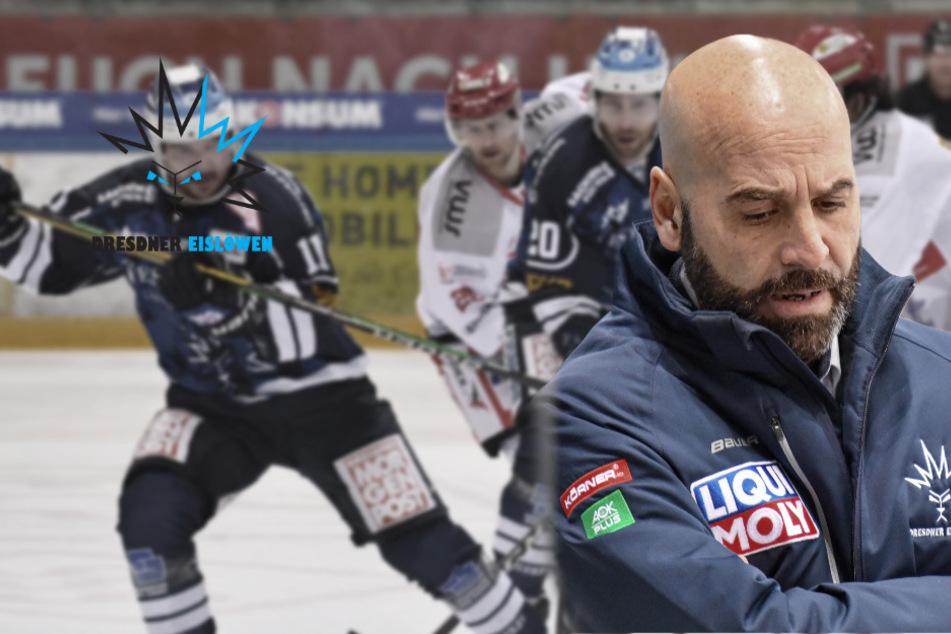 Trainer-Beben bei den Dresdner Eislöwen: Coach Rossi entlassen!