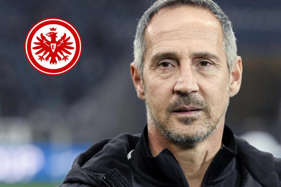 Sieben Spiele in 24 Tagen: Eintracht will gegen Leverkusen guten Start in Mammut-Programm