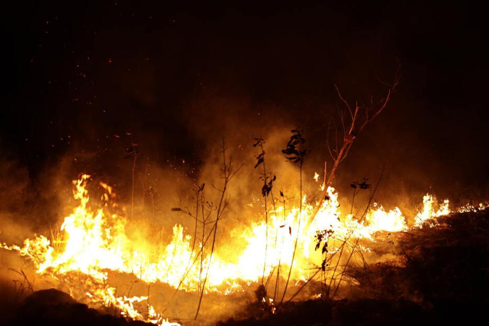 Flammen lodern in einem Waldgebiet im Bundesstaat Rondonia.