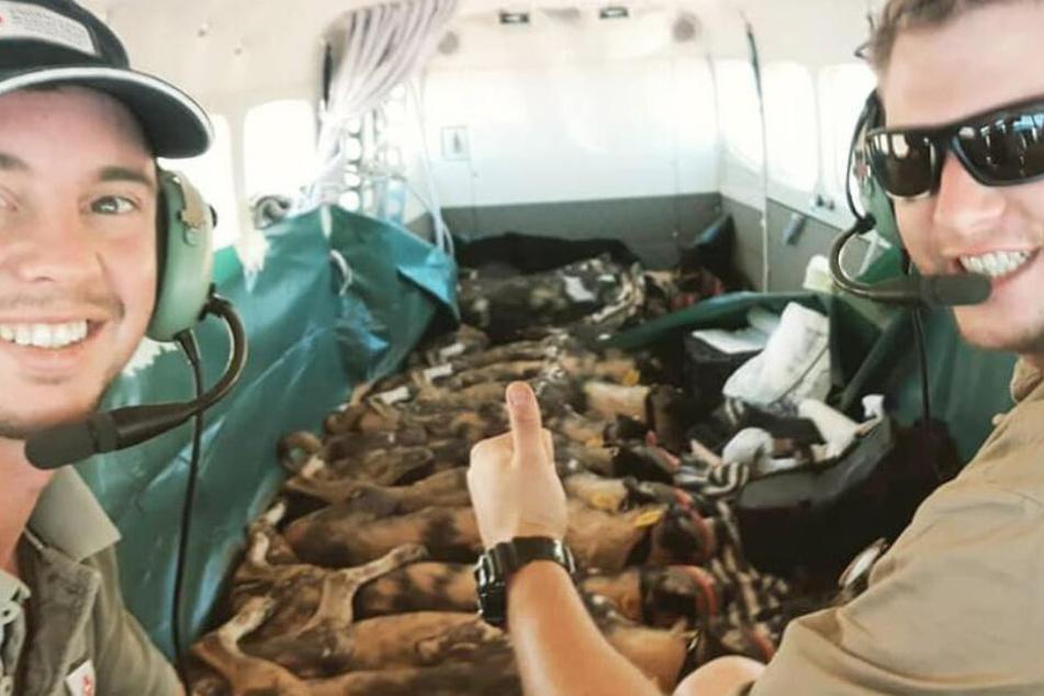 Hunde schlafen Seite an Seite im Flugzeug! Wo werden sie hingebracht?