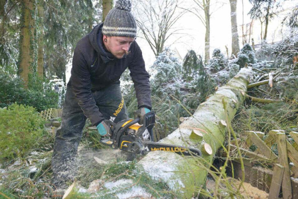 Stephan Drichelt (32) packte mit der Motorsäge an, zerschnitt einen Baum.