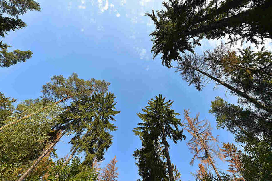 Sturmschäden in der Heide: Tausende Bäume kämpfen ums Überleben!