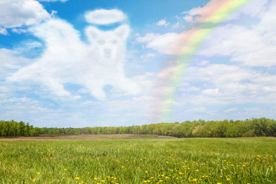 """Der kleine Hund ist jetzt """"über die Regenbogenbrücke"""" gegangen."""
