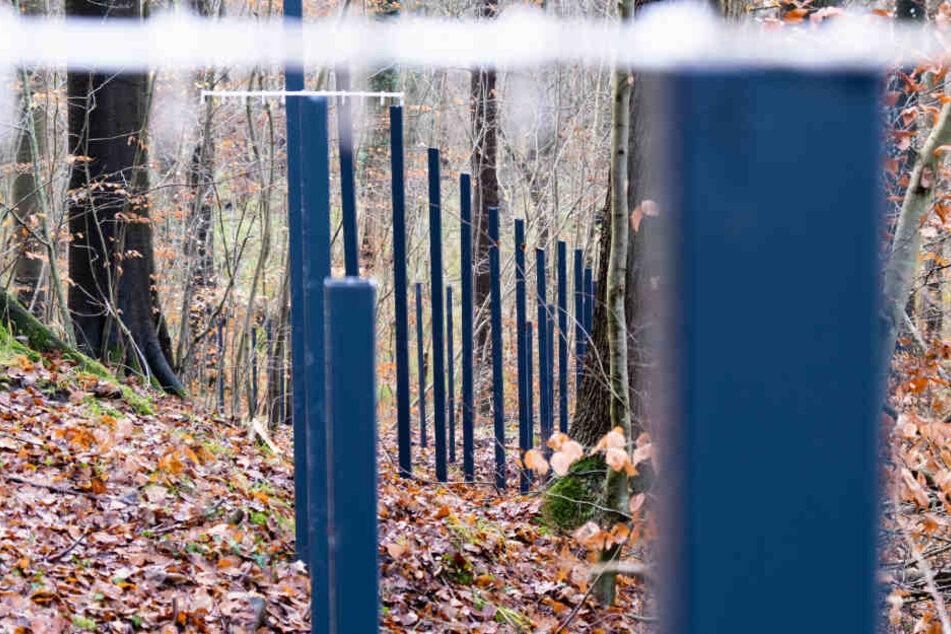 Teile des neuen Grenzzauns zwischen Deutschland und Dänemark stehen im Wald.