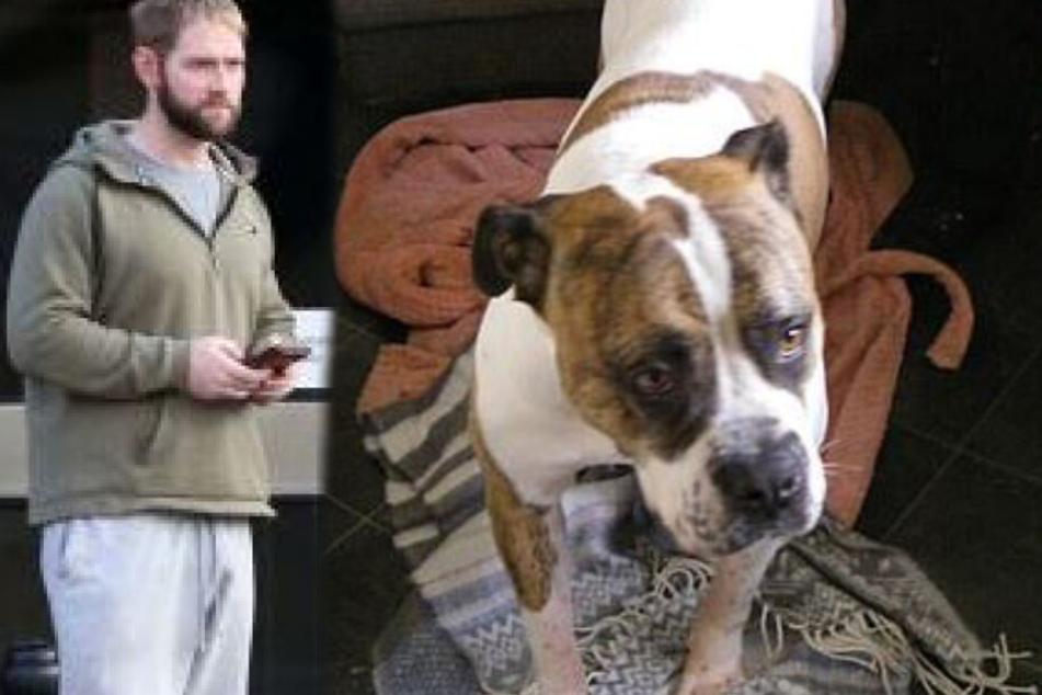 Hund geschlagen und mit Drogen vollgepumpt, doch der Besitzer kommt mit Witzstrafe davon