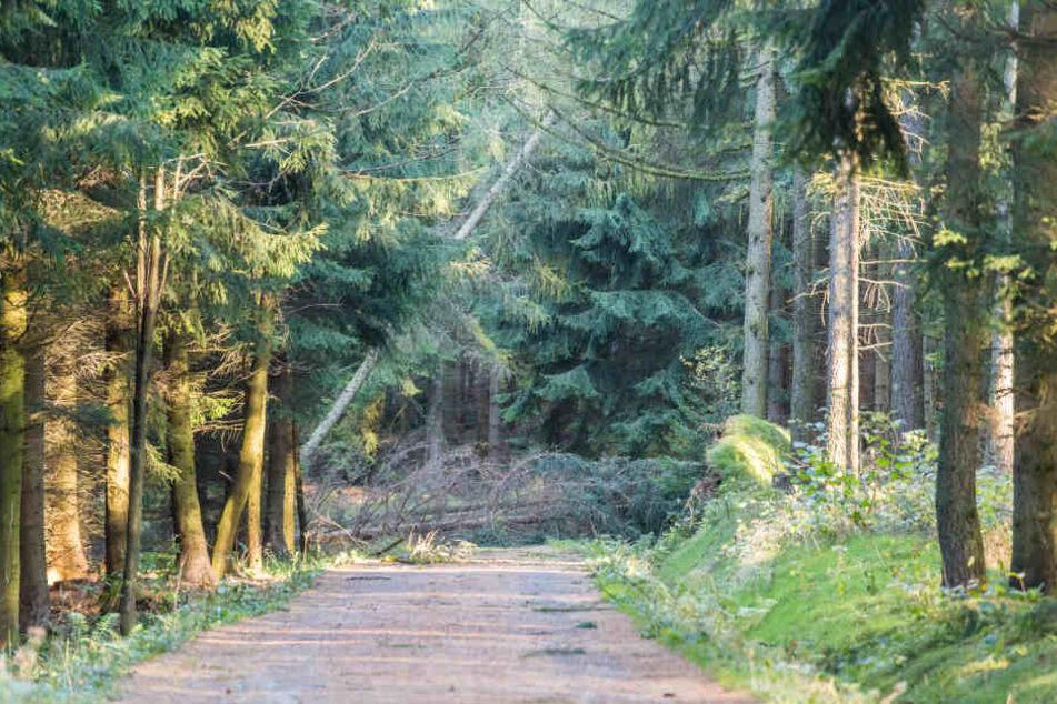 Das Betreten der Wälder nach dem Sturm ist lebensgefährlich.