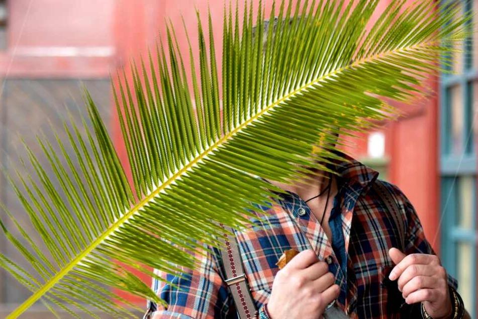 Dschungelcamp: Ex-GZSZ-Star im Dschungelcamp: Und er soll eine Hammer-Gage kassieren!