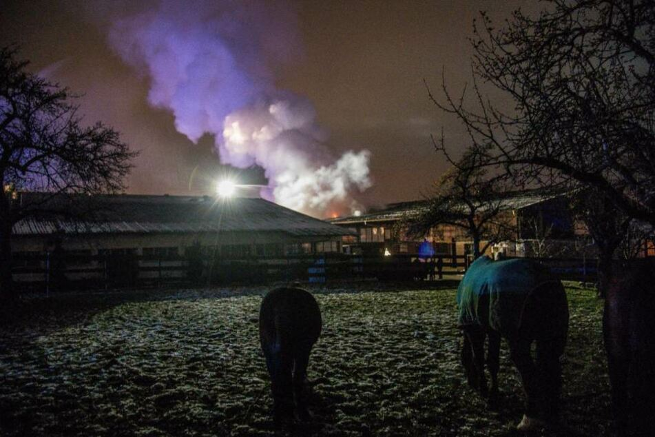 Die Pferde konnten allesamt in Sicherheit gebracht werden.