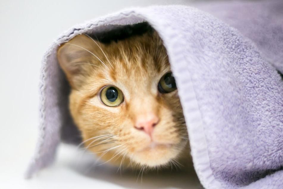 Jede Katze hat einen ganz eigenen Typ. Manche Miezen sind von vornherein etwas scheuer.
