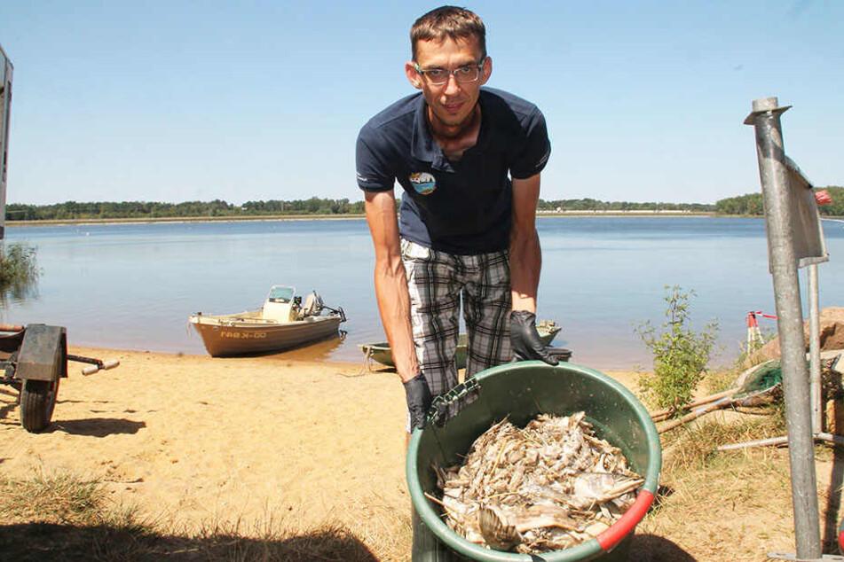 """Tonnenweise toten Fisch geborgen: """"Elbflorenz""""-Chef René Häse (36) im Kriseneinsatz gestern am Silbersee."""