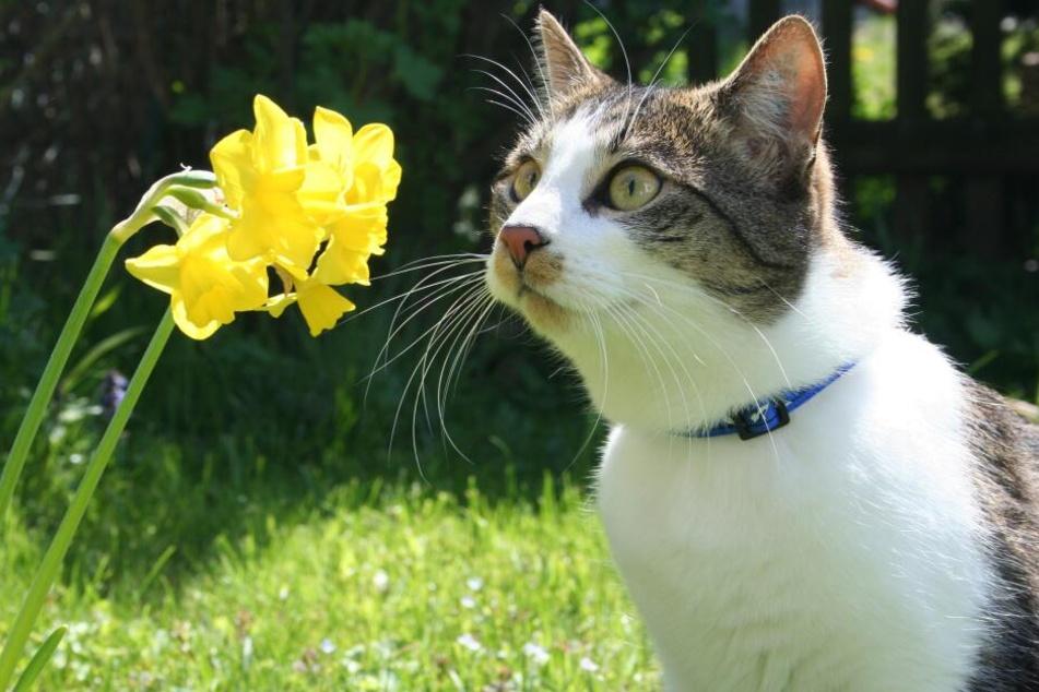 Das Tierheim sucht nicht das passende Tier für einen Menschen, sondern den passenden Menschen für ein Tier.