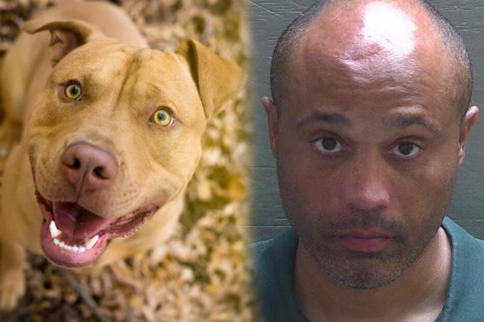 Mann schmeißt Hund von einer Brücke, doch damit hat er nicht gerechnet...