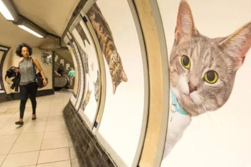 Katzen-Angriff auf die Londoner U-Bahn!
